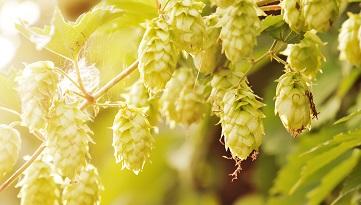 Brauereien und Getränkeindustrie